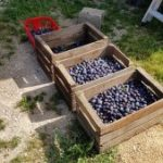 caisse_fruits